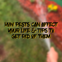 How Pests Can Affect Your Life + Tips To Help Get Rid Of Them